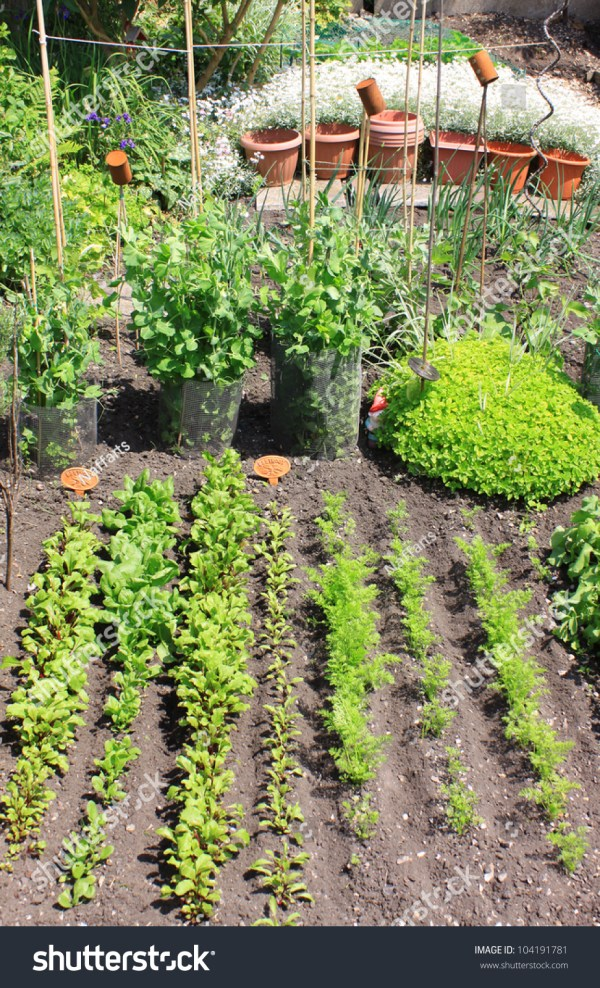 Small City Vegetable Gardenplot Variety Organically Stock 104191781 - Shutterstock
