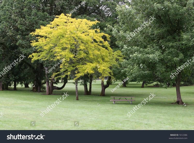 Small Tree Light Green Leaves Park Stock Photo 1612386