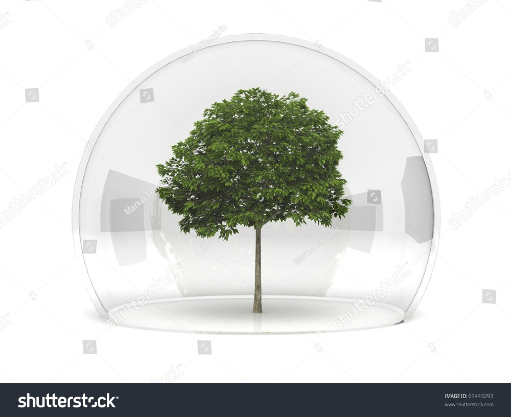 medium resolution of a sorbus tree growing under a glass dome in safety