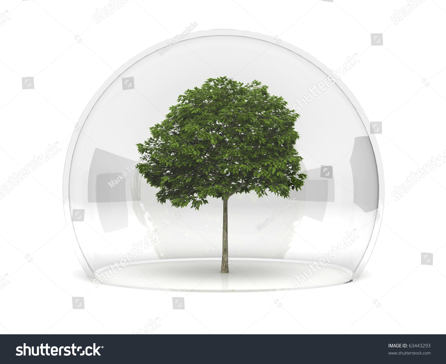 hight resolution of a sorbus tree growing under a glass dome in safety