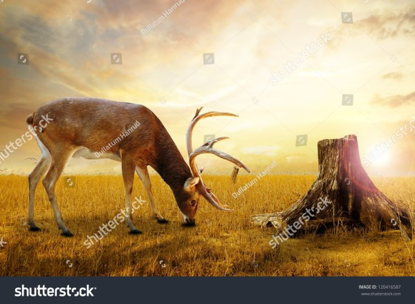 Abstract Deer Grazing Meadow Stock Illustration 120416587 - Shutterstock