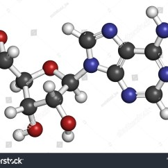 Adp Molecule Diagram Labeled Honeywell Focuspro 5000 Wiring Adenosine Ado Purine Nucleoside Important