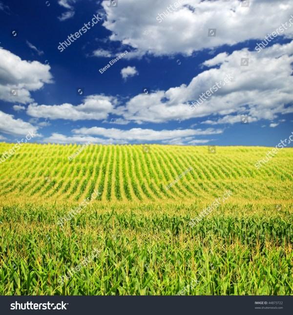 agricultural landscape corn field