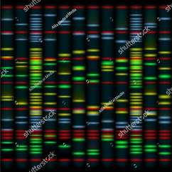 Dna Fingerprinting Diagram Bluebird Bus Wiring Diagrams An Example Of 10 Individuals Are