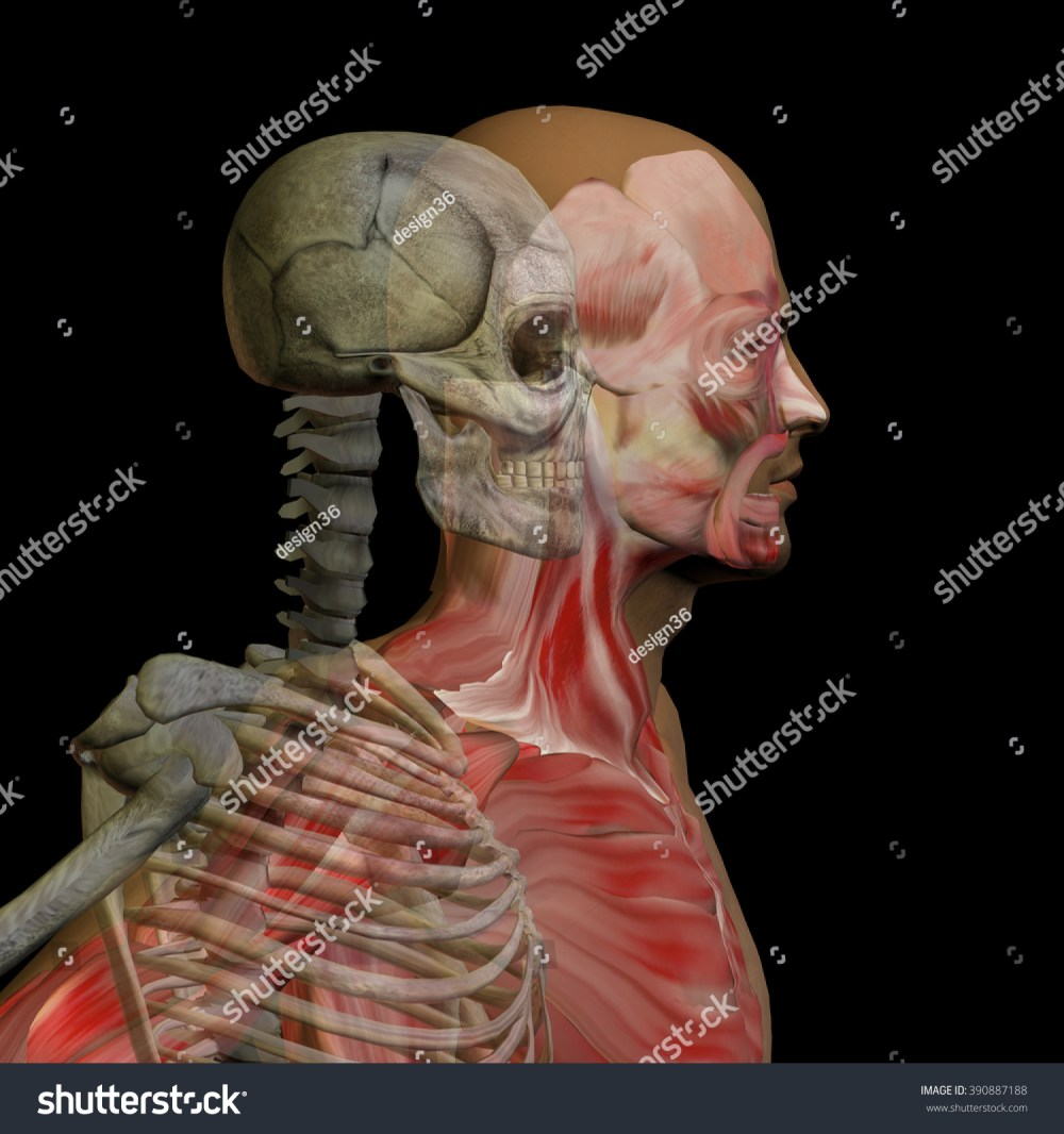 medium resolution of anatomy concept conceptual human man body chest head isolated on background metaphor to medical