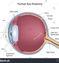 anatomy human eye stock illustration 77804425 shutterstock rh shutterstock com human eye diagram without labels structure of human eye diagram [ 1500 x 1306 Pixel ]