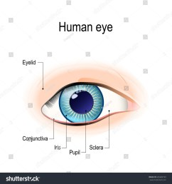 anatomy of the human eye in front view external view schematic diagram detailed [ 1500 x 1600 Pixel ]