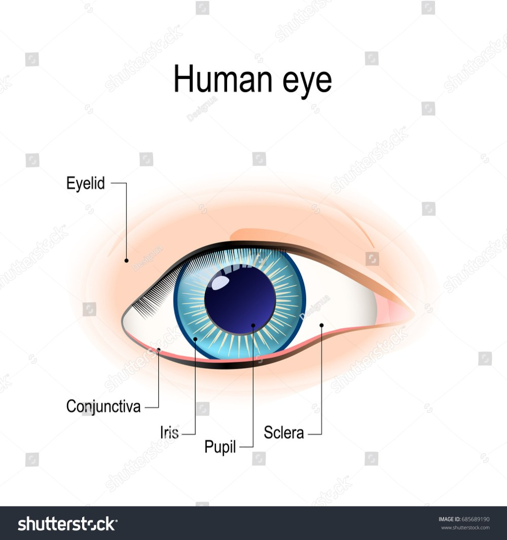 medium resolution of anatomy of the human eye in front view external view schematic diagram detailed