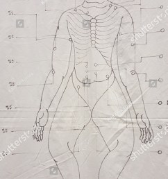 ancient traditional thai massage body drawing diagram on white background  [ 845 x 1600 Pixel ]