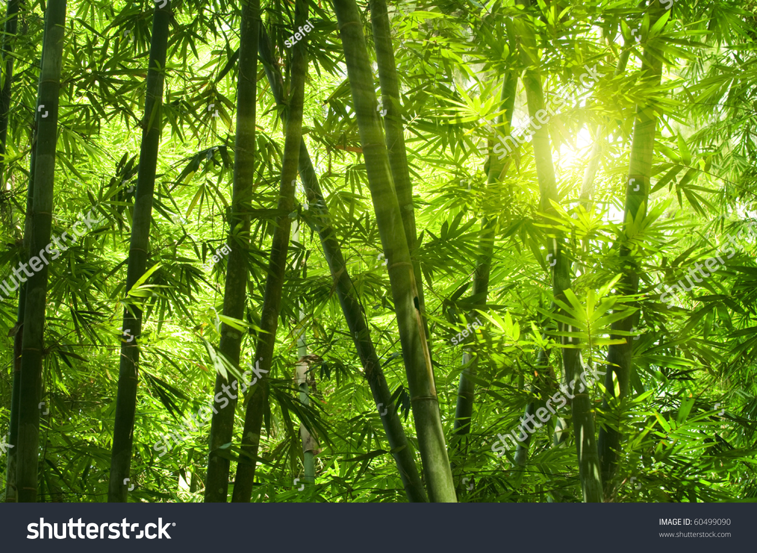 bamboo forest with morning sunlight wall mural ifmore asian mural