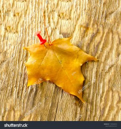 autumn maple leaves clipart on wooden table falling leaves natural background  [ 1500 x 1600 Pixel ]