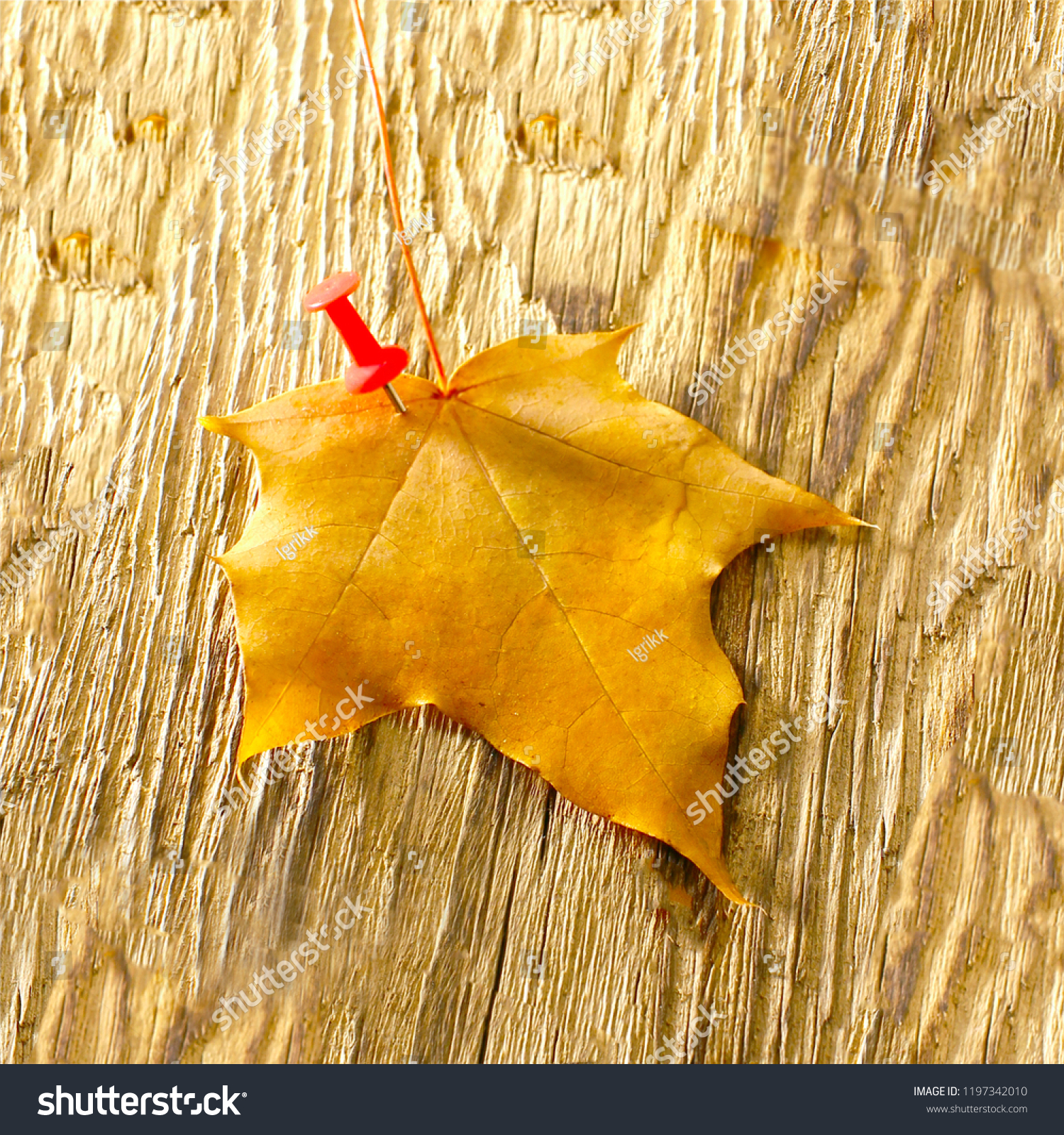 hight resolution of autumn maple leaves clipart on wooden table falling leaves natural background