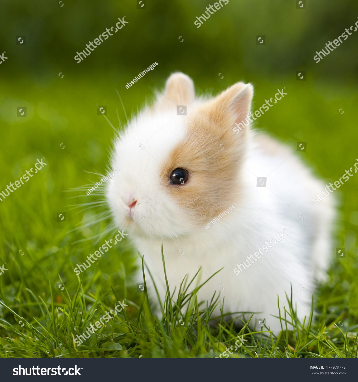 Baby Rabbit Sitting Grassland Stock Photo