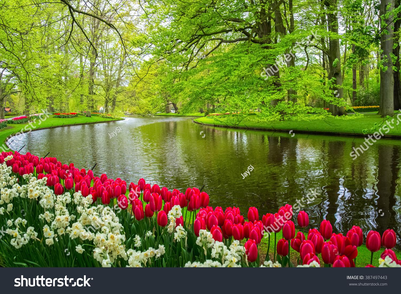 Beautiful Spring Flowers Near Pond Keukenhof Stock Photo
