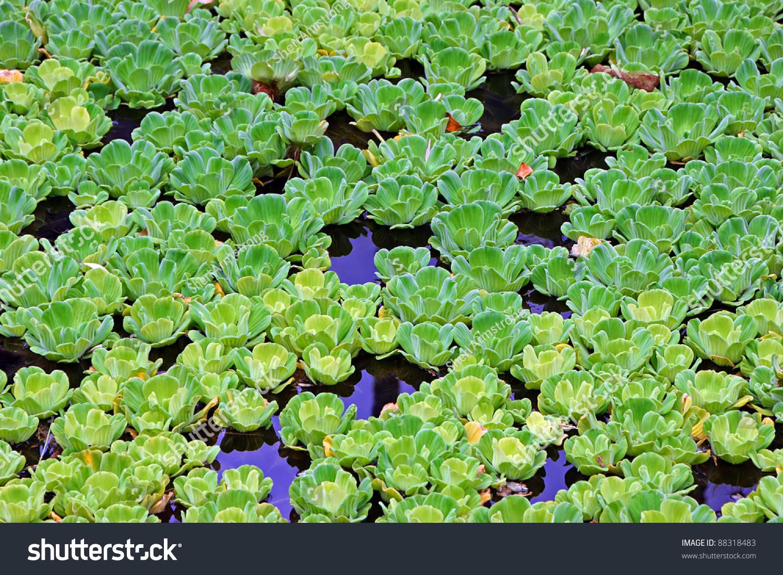 Beautiful Water Plants