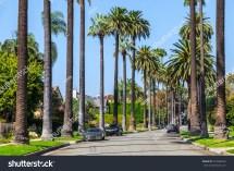Beverly Hills Ca Oct 21 Palm Stock 224968249