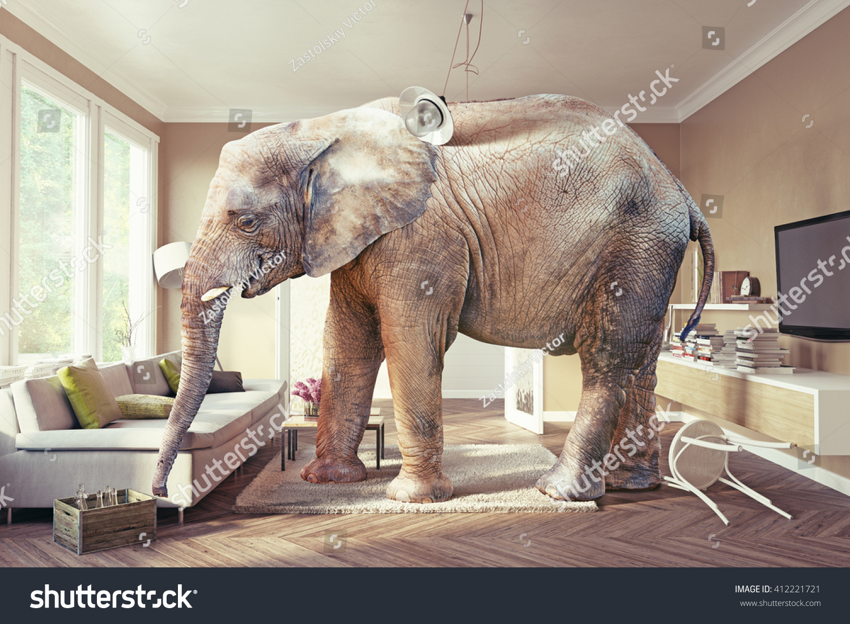 Big Elephant Case Beer Living Room Stock Photo 412221721