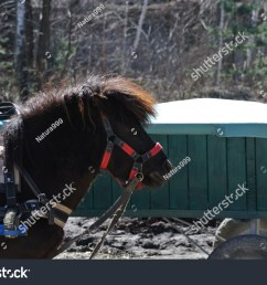 black pony in harness [ 1500 x 1104 Pixel ]