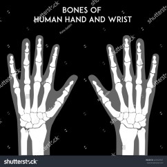 Wrist And Hand Unlabeled Diagram New Food Pyramid Bones Of Human Medically Accurate Vector Minimal Illustration For Web Or Print Ez Canvas