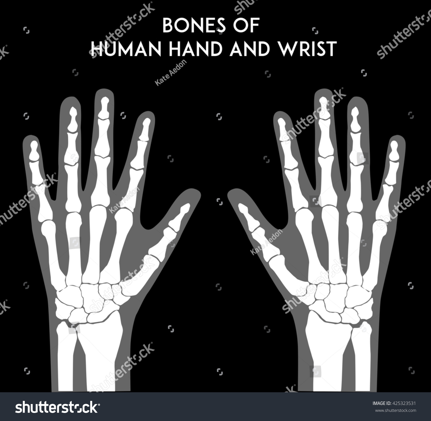 wrist and hand unlabeled diagram citroen c4 wiring bones of human medically accurate vector minimal illustration for web or print ez canvas