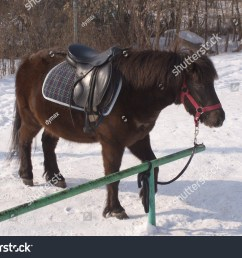 brown small pony in harness stands on snow outdoor [ 1500 x 1173 Pixel ]