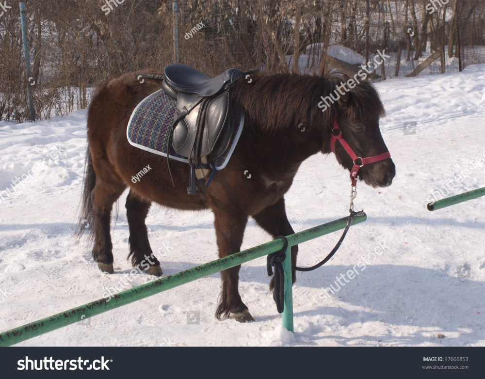 medium resolution of brown small pony in harness stands on snow outdoor