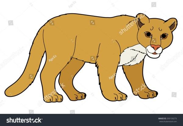 Cartoon Animal Puma Flat Coloring Style Stock Illustration 200159273 - Shutterstock