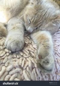 Cat Sleeping On Carpet Home Stock Photo 373557739 ...