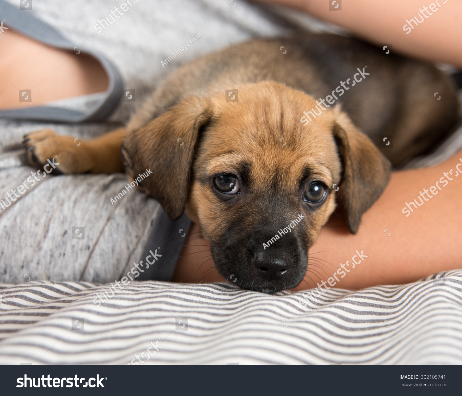 Child Protecting Brown Puppy With Floppy Ears Stock Photo 302105741 : Shutterstock