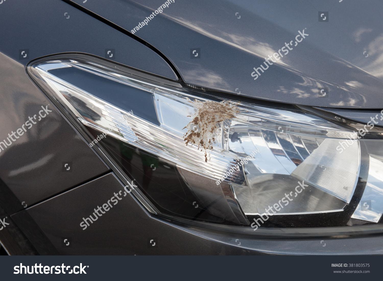Closeup Bird Droppings On Car Stock Photo 381803575