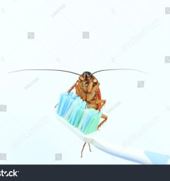 cockroach isolated on toothbrush white background bugs insects animals carry disease [ 1500 x 1101 Pixel ]