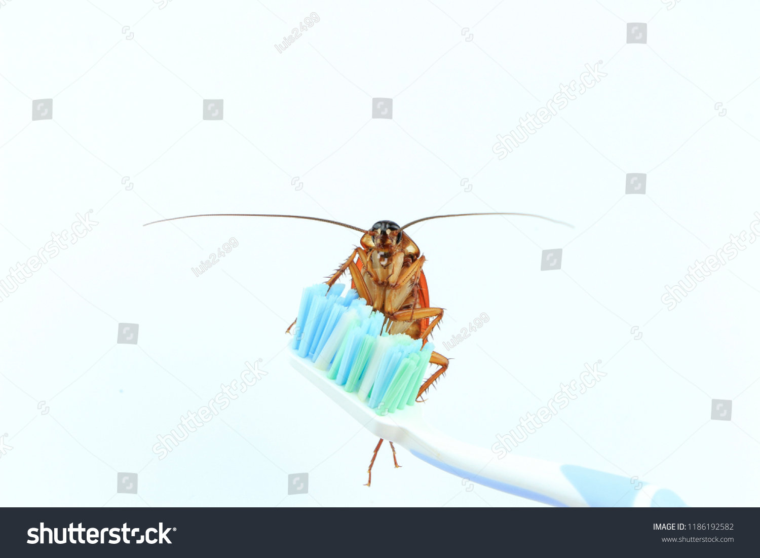 hight resolution of cockroach isolated on toothbrush white background bugs insects animals carry disease