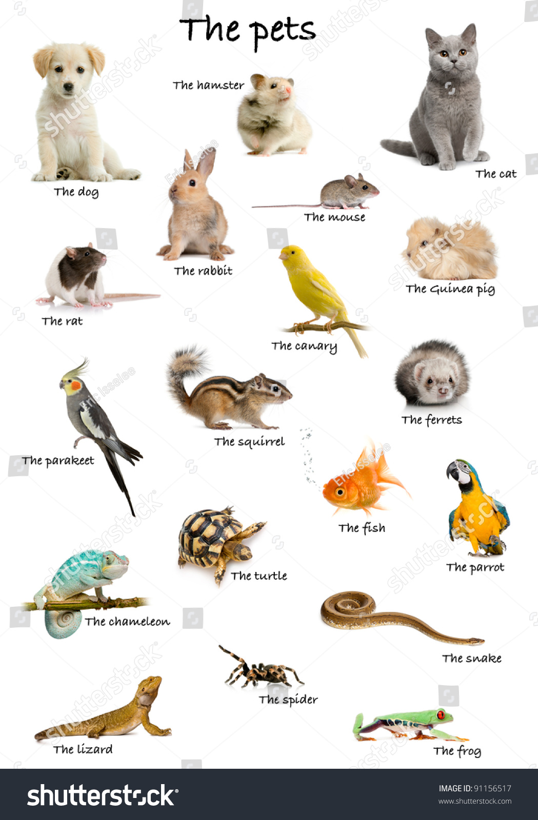 Collage Pets Animals English Front White Stock Photo