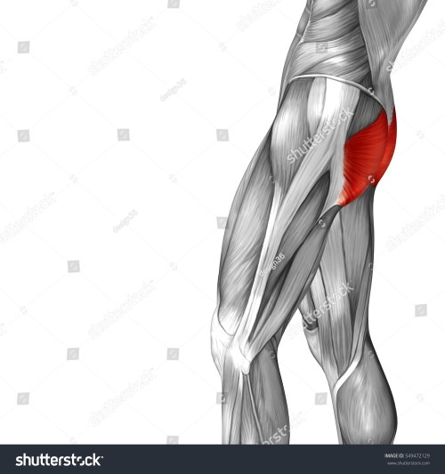 small resolution of concept conceptual 3d illustration human upper leg anatomy or anatomical and muscle isolated on white background