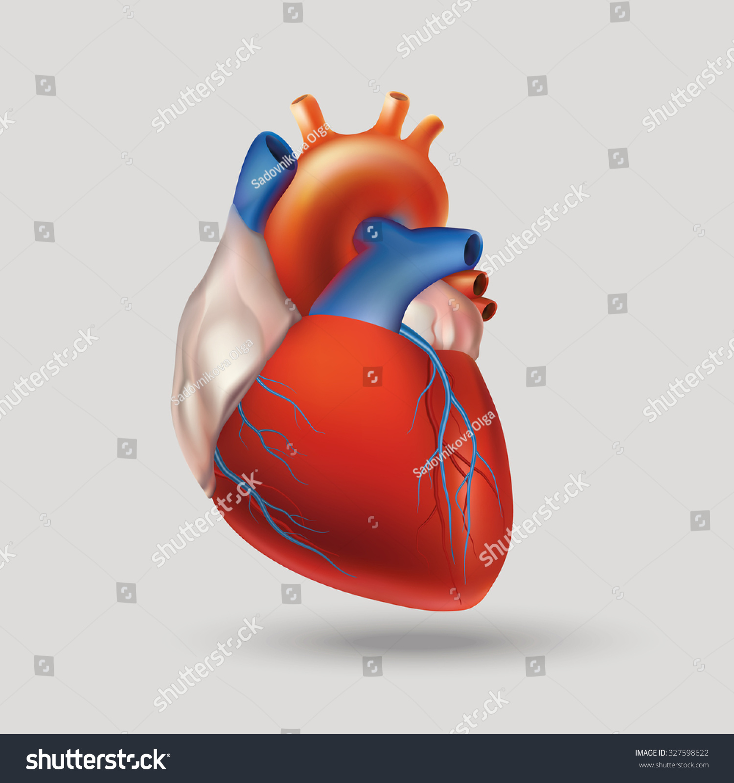 Conditional Image Model Human Heart Hollow Stock