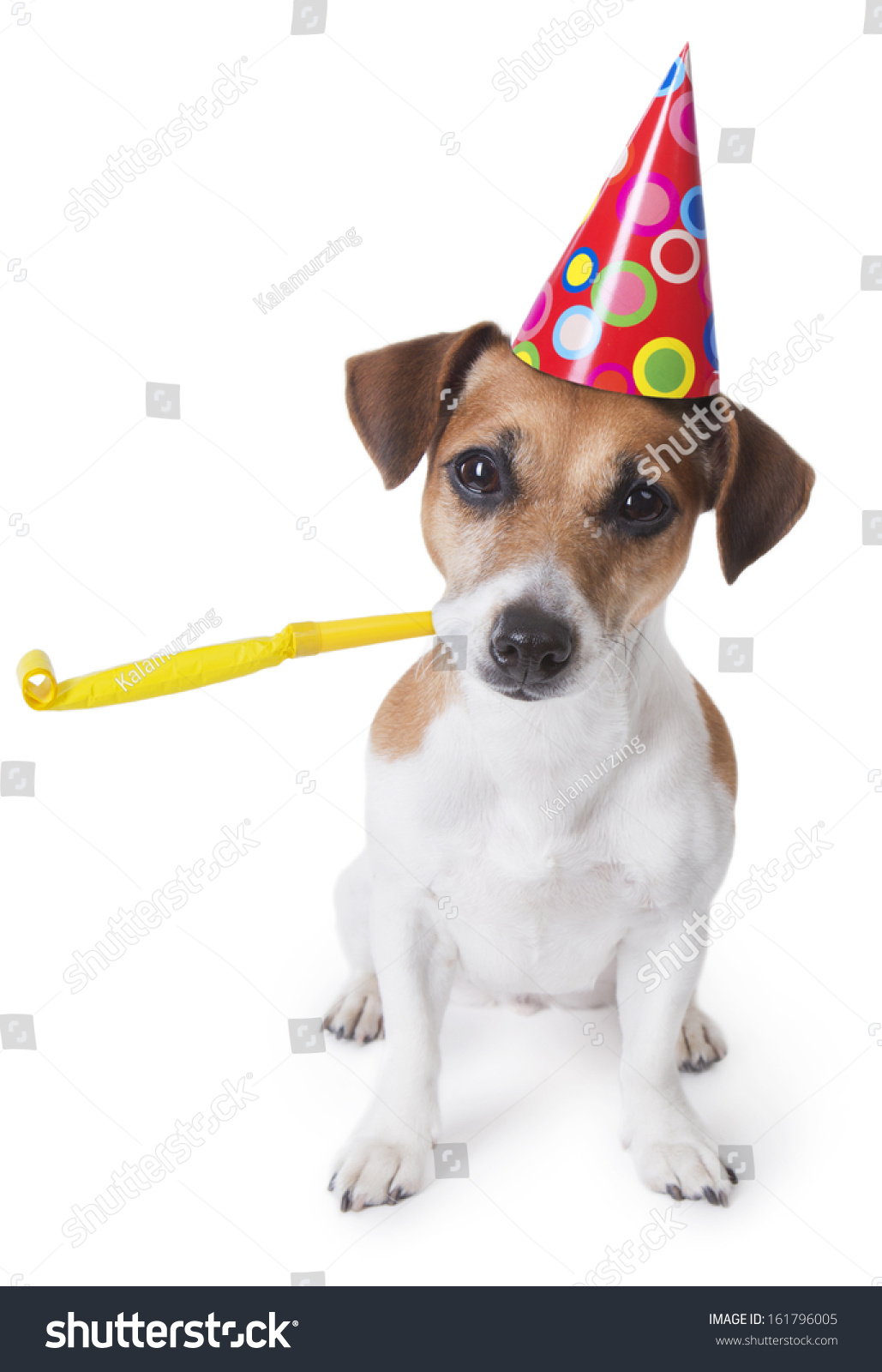 Dog With Hat Maker : maker, Party, Designed, Stock, Photo, (Edit, 161796005