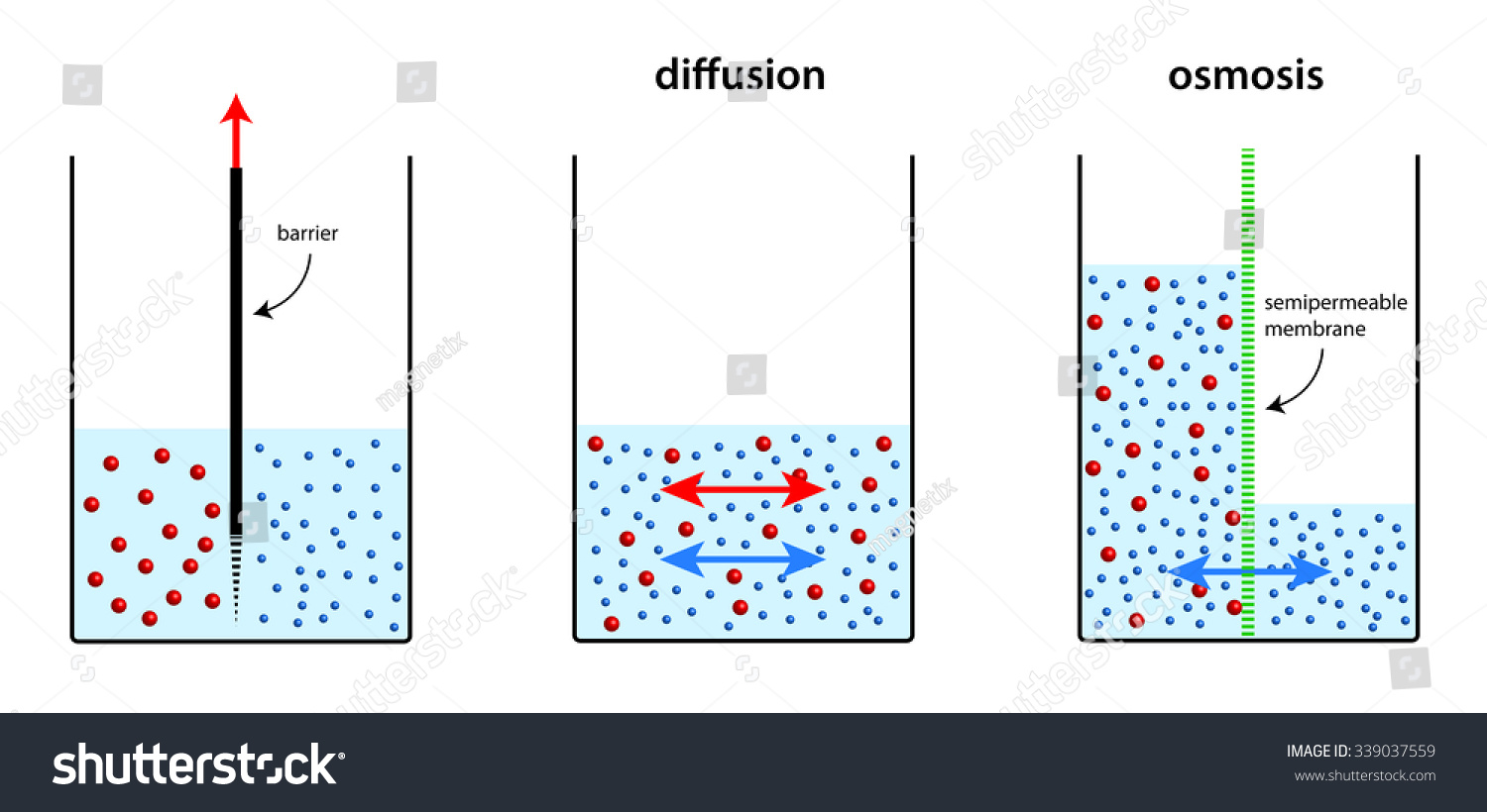 Demonstration Osmosis Stock Illustration