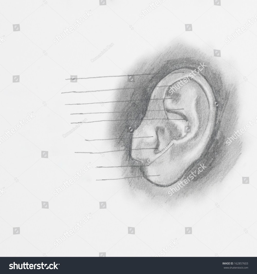medium resolution of detail of ear pencil drawing on white paper