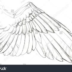 Bird Bone Structure Diagram Leeson Motor Wiring Detailed Sketch Birds Dove Wing Part Stock Illustration