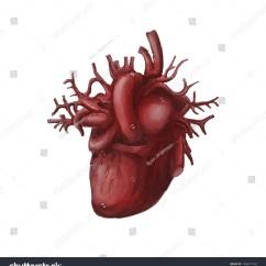 Slug Anatomy Diagram Hoa Wiring Digital Painting Illustration Human Heart Organ Stock Photo Edit Of A Hand Drawn On White Background