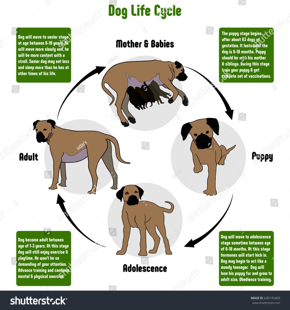 medium resolution of dog life cycle diagram with all stages including birth mother and babies puppy adolescence adult simple