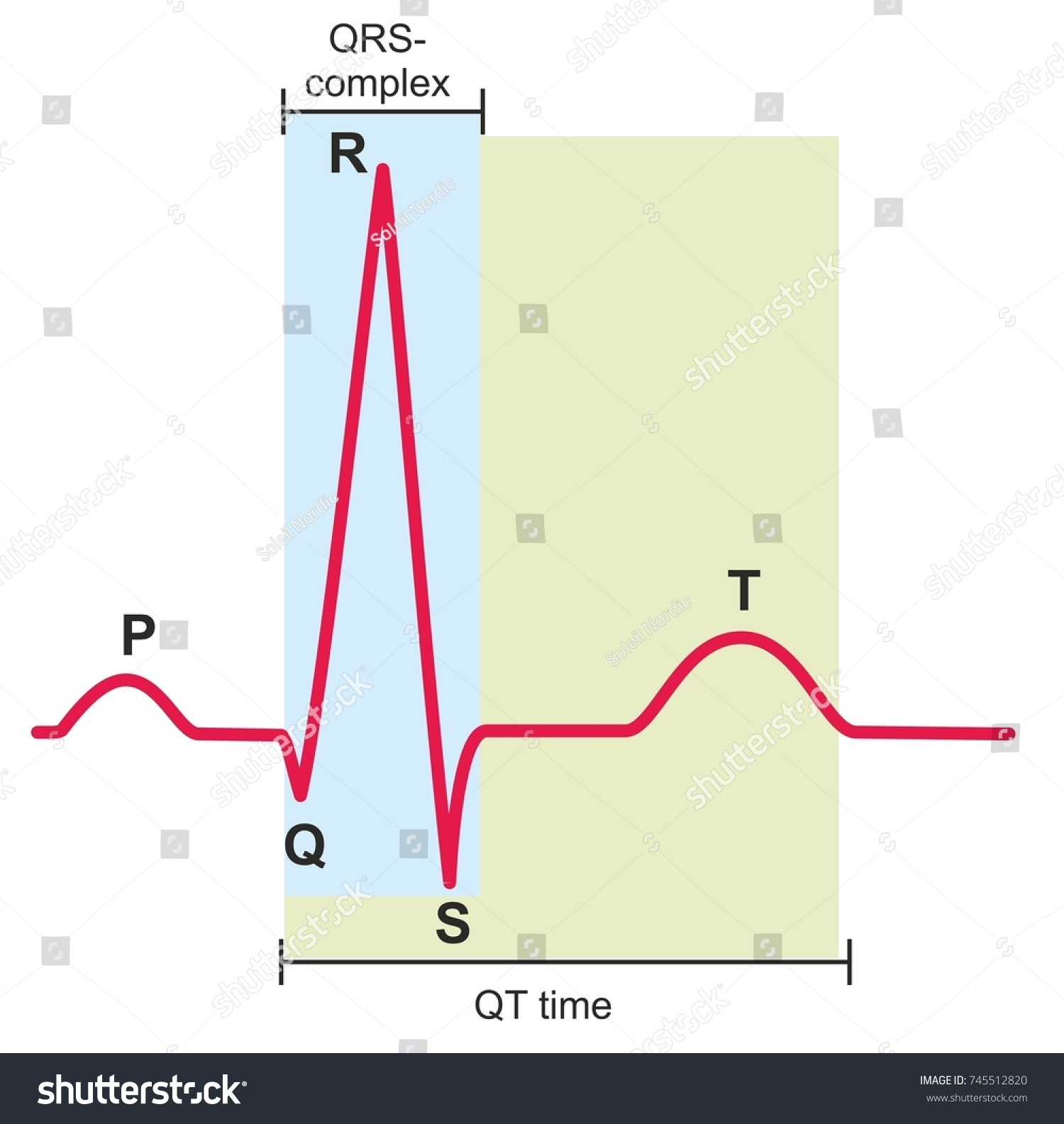 hight resolution of electrocardiography ecg or ekg graph of a heart in normal rhythm