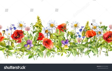 border horizontal floral frame flowers meadow watercolor clipart grass herbs wild flower repeated shutterstock seamless meadows clipground illustration