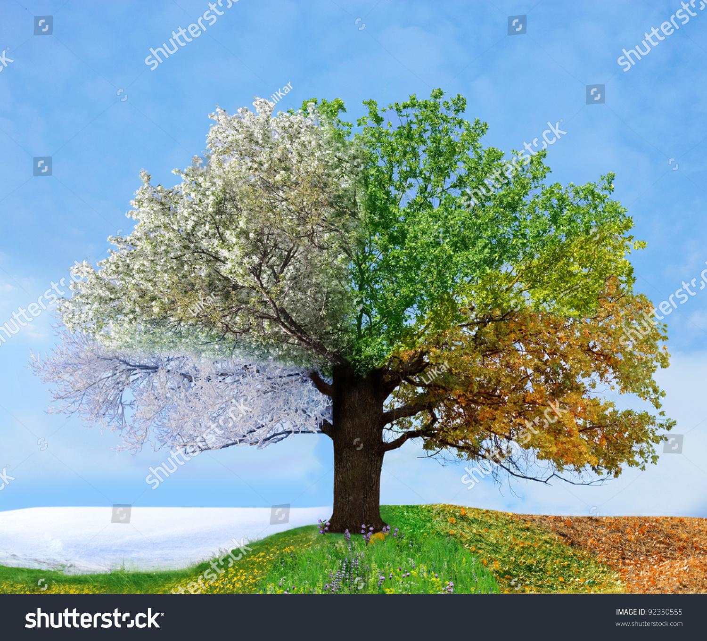 Four Season Tree Stock Photo Shutterstock