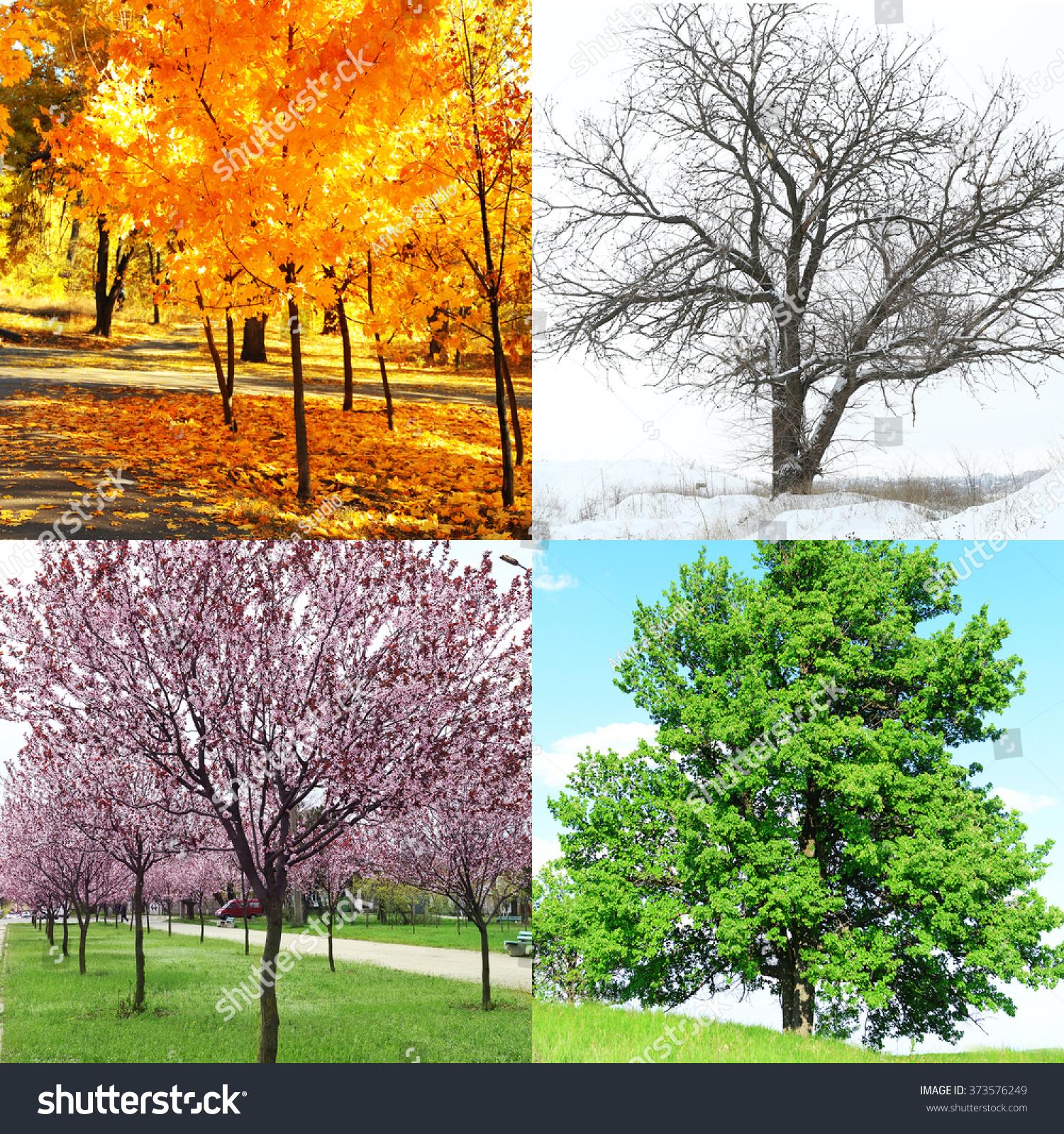 Four Seasons Collage Several Photos Beautiful Stock Photo