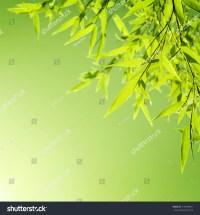 Fresh Bamboo Leaves Border, Green Plant Stalk At Summer ...