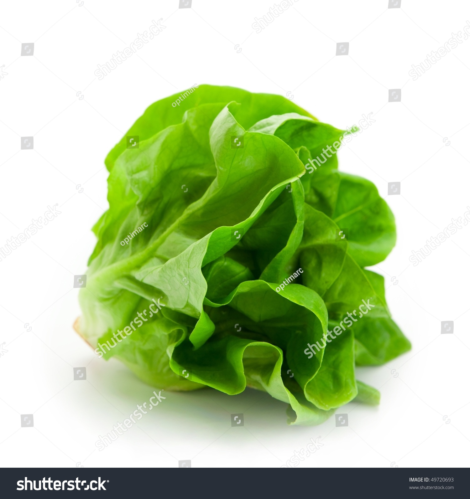Fresh Butterhead Salad Lettuce (Also Known As Boston, Bibb, Buttercrunch, And Tom Thumb, Arctic King) Isolated On White Stock Photo 49720693 ...