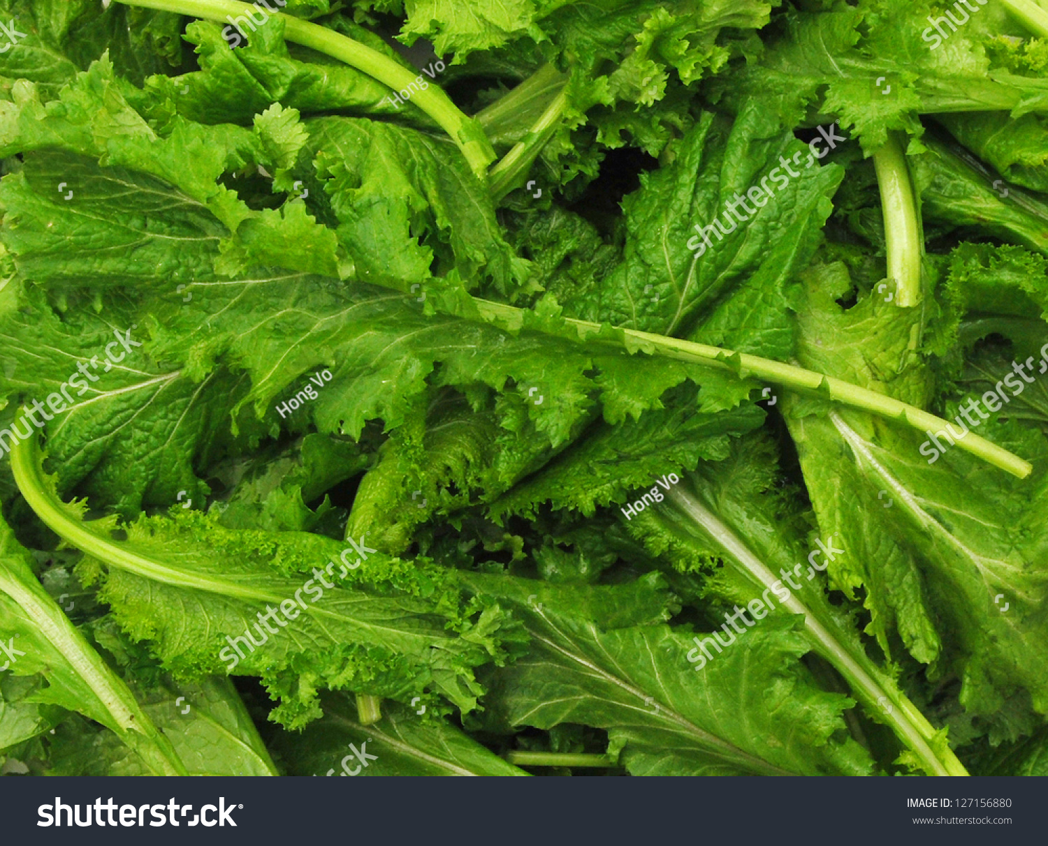 Fresh Curly Mustard Green Leaves On Background Stock Photo 127156880 : Shutterstock