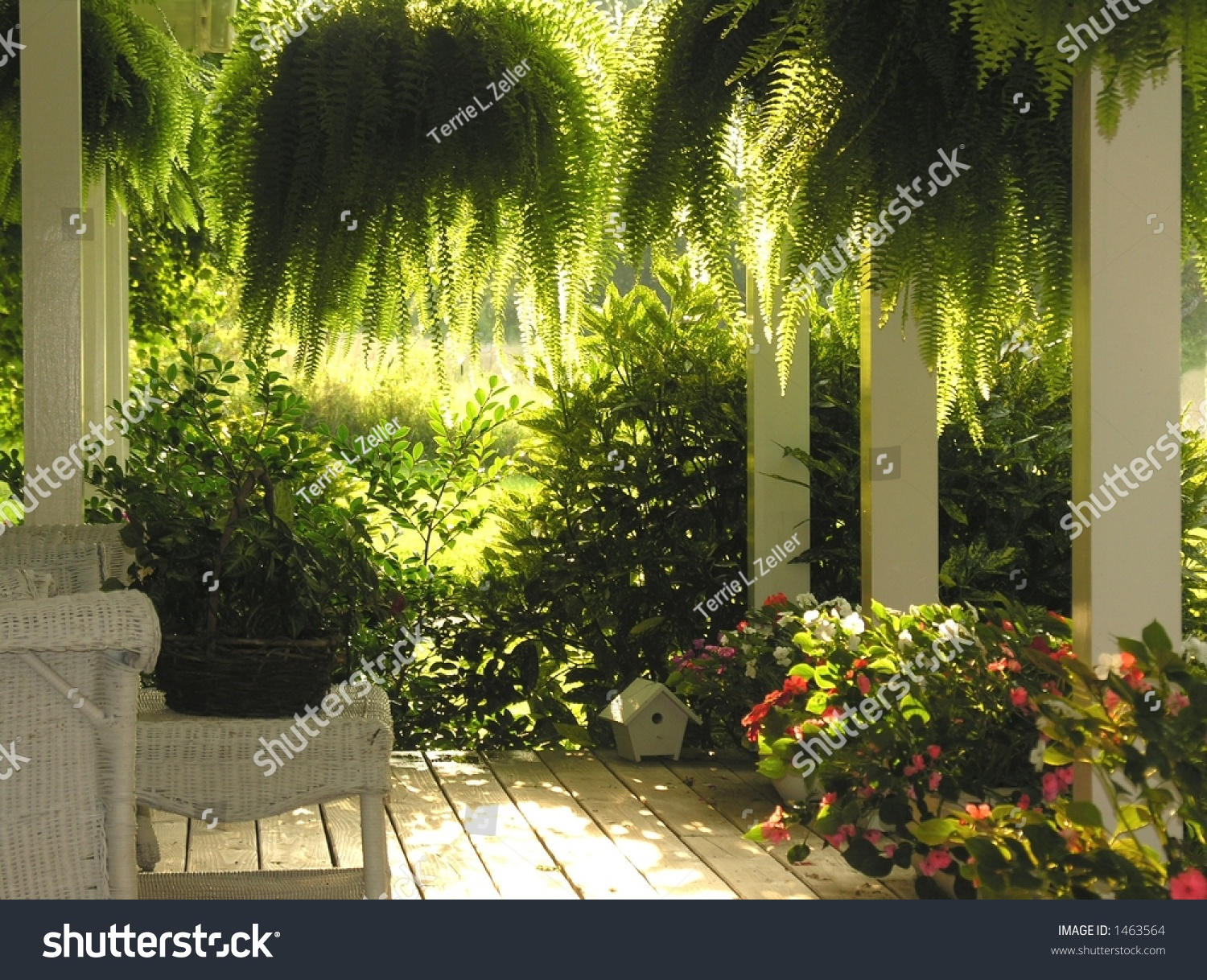 outdoor porch chairs black flat bungee office chair with arms front hanging ferns stock photo 1463564 - shutterstock