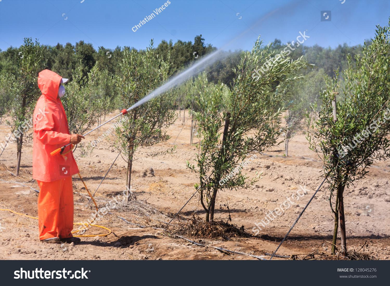 Fumigation Growing Field Stock Photo 128045276 - Shutterstock